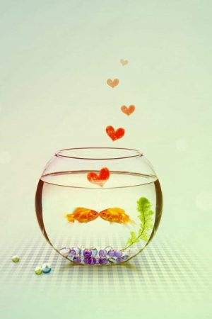 Gold Fish Love HD wallpapers