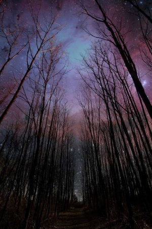 Tall Trees Images